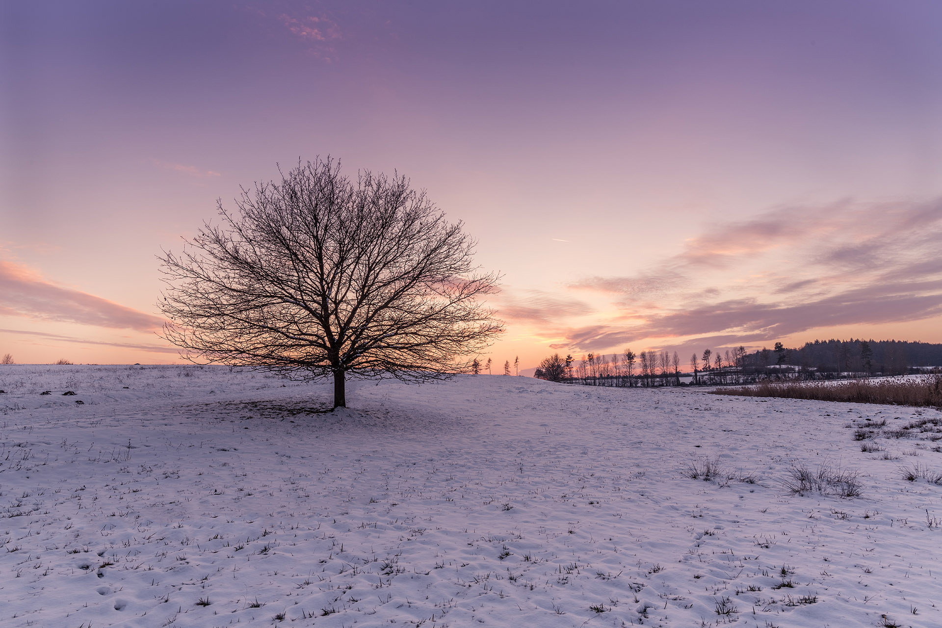 <i>Winter tree</i><span>Landscape</span>